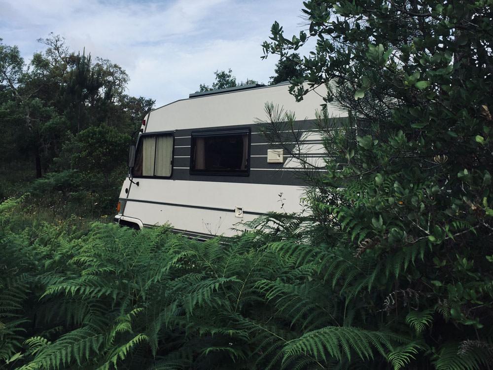 Freistehen in Portugal: Der Camper ist umrahmt von grünen Sträuchern und Farnen