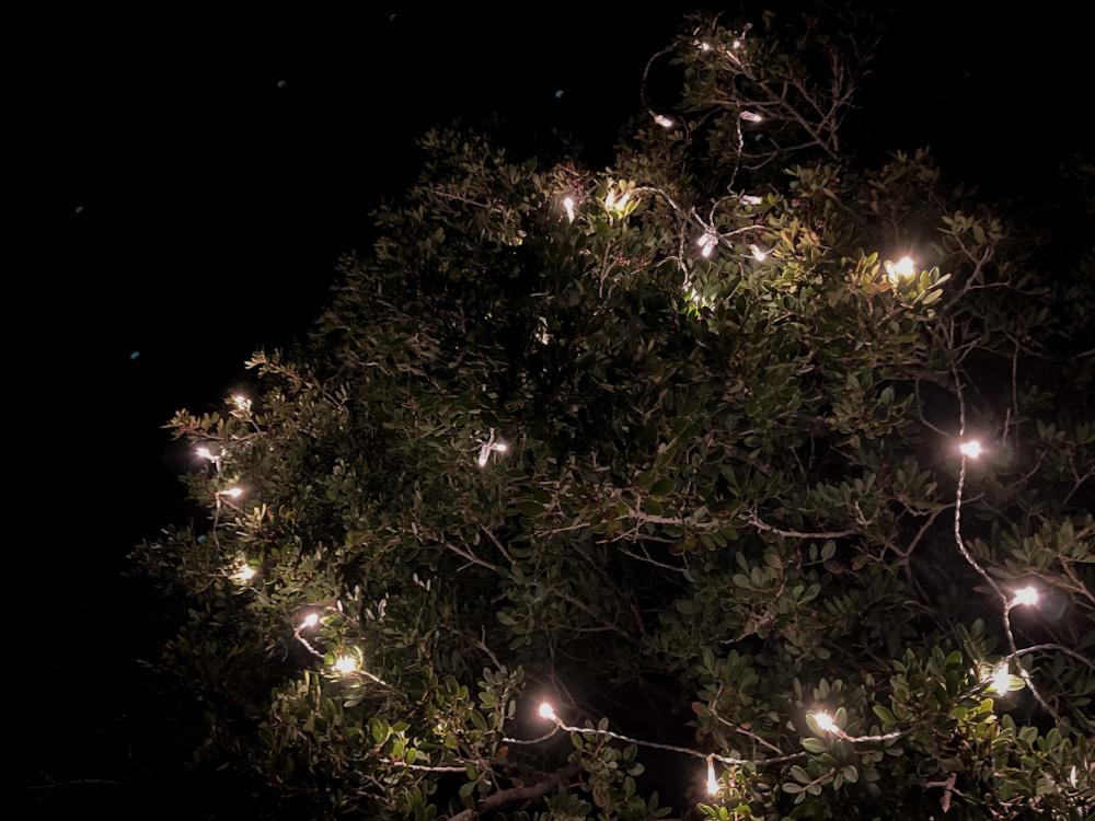 Nachhaltige Weihnachten im Camper: Ein Weihnachtsbaum muss nicht gefällt werden