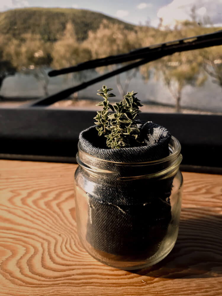 Vanlife: Pflanze im Glas