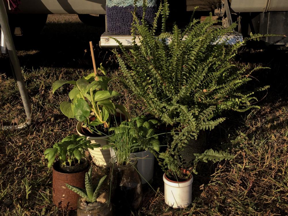 Pflanzen im Wohnmobil