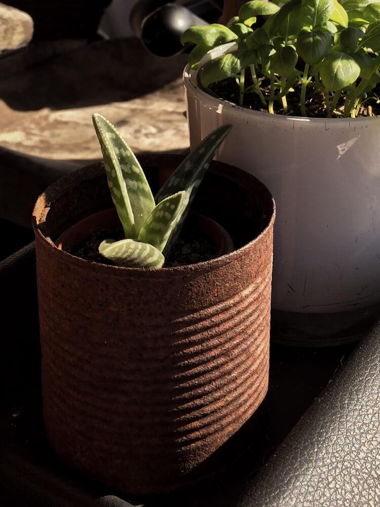 Upcycling Pflanze Vanlife