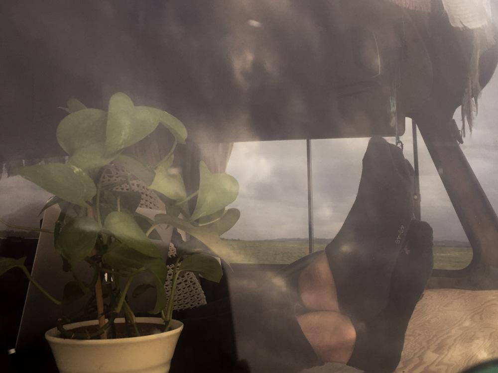 Pflanzen beim Vanlife